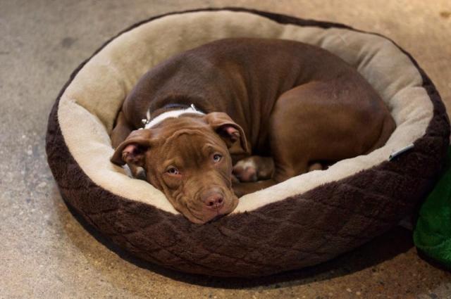 Worlds cutest, but worst watch dog.